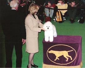 Johnny at Westminster Dog Show